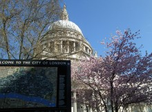 St. Paul's cathedral blossom