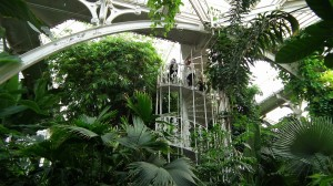 Kew Gardens Palm House interior 2 (1)