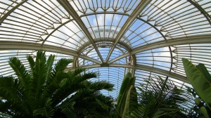 Kew Gardens Palm House interior 3jpg