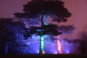 Kew Gardens Christmas 1