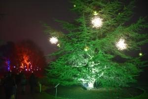 Kew Gardens Christmas 21