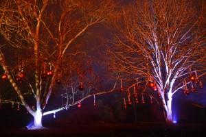 Kew Gardens Christmas 29