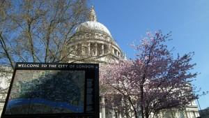 St. Paul blossom resized