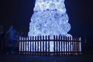Kew Gardens Christmas 7